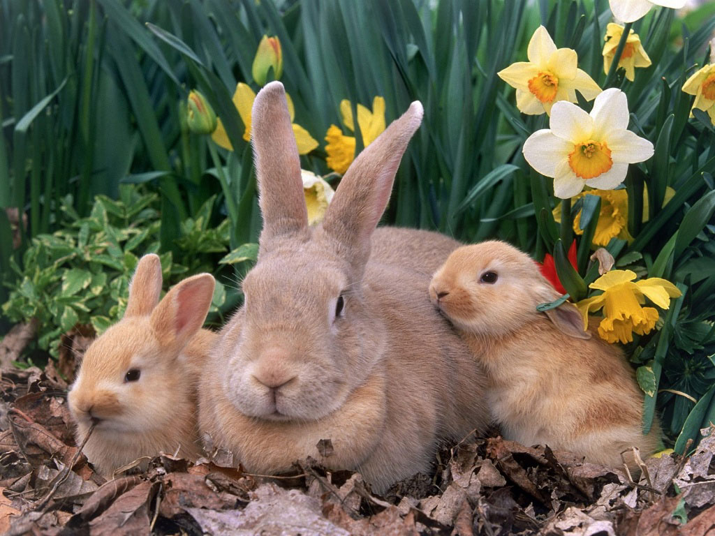 coelha-filhotes