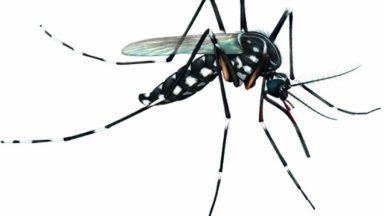 Dengue: sintomas, transmissão e tratamento