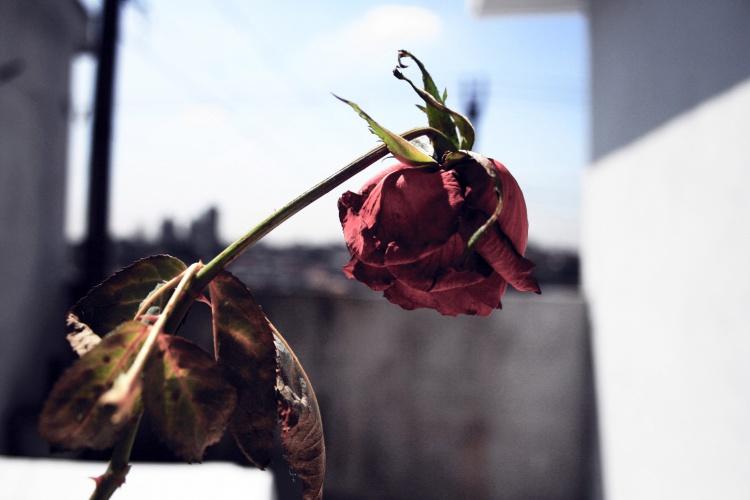 Abuso Moral e Físico por Parte do Marido