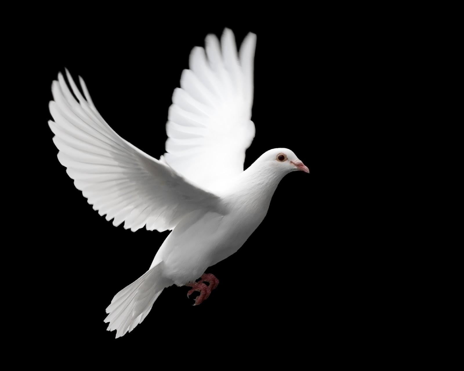 Quais Sao Os Simbolos Do Espirito Santo