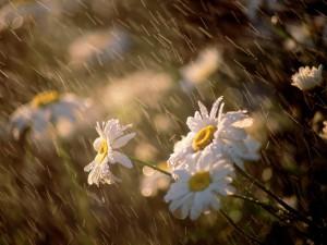 chuva-nas-flores_6406_1600x1200