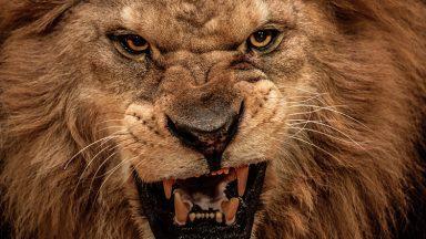 O Leão está a rugir, ficai atento!