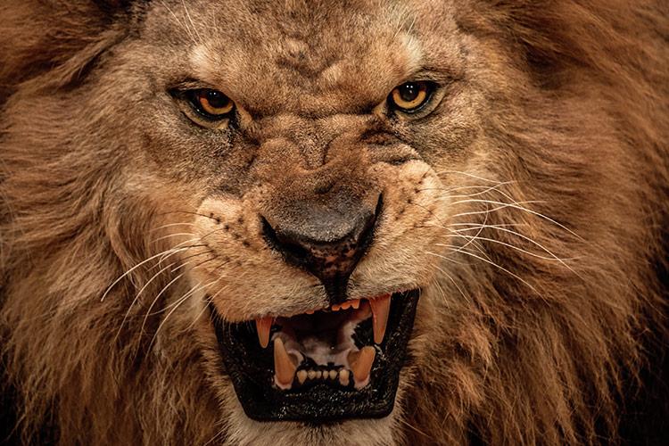 O Leão está a rugir, ficai atento! | Livres de todo mal