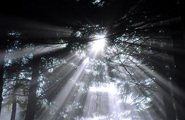 A Luz que iluminas as trevas, seja luz no mundo,