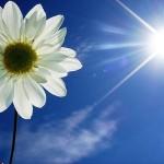 Flor e Sol