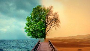Aprofundamento: como cultivar virtudes?