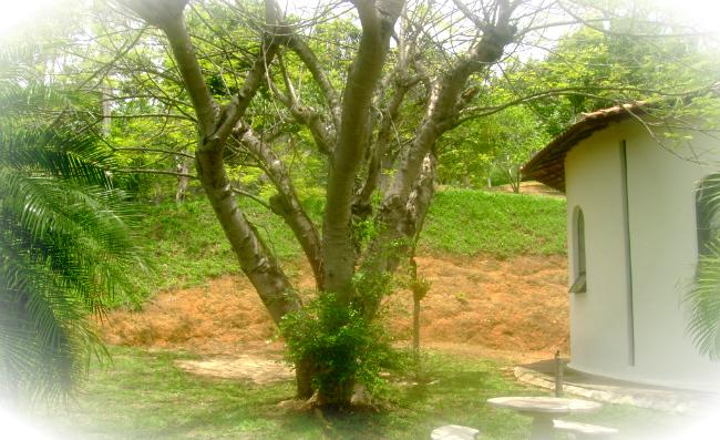 arvore da Casa de Maria - Canção Nova Queluz